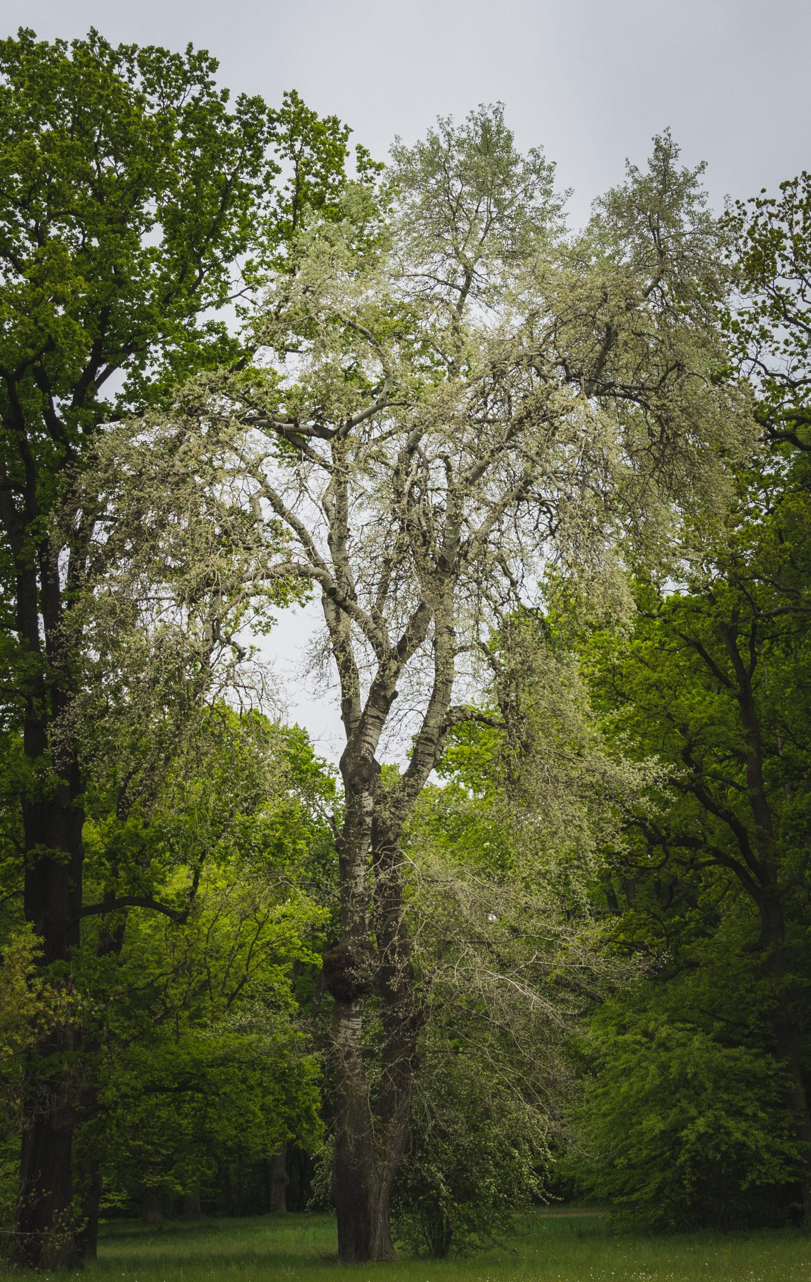 Drzewo_2